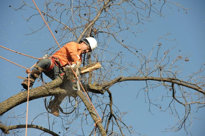 גיזום עצים